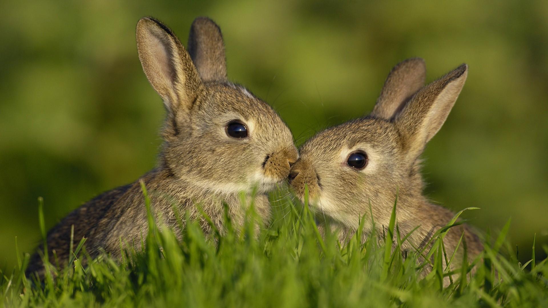 Скачать обои братья зайцы в траве