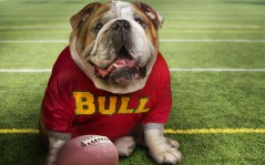Bulldog fan / 1280x800