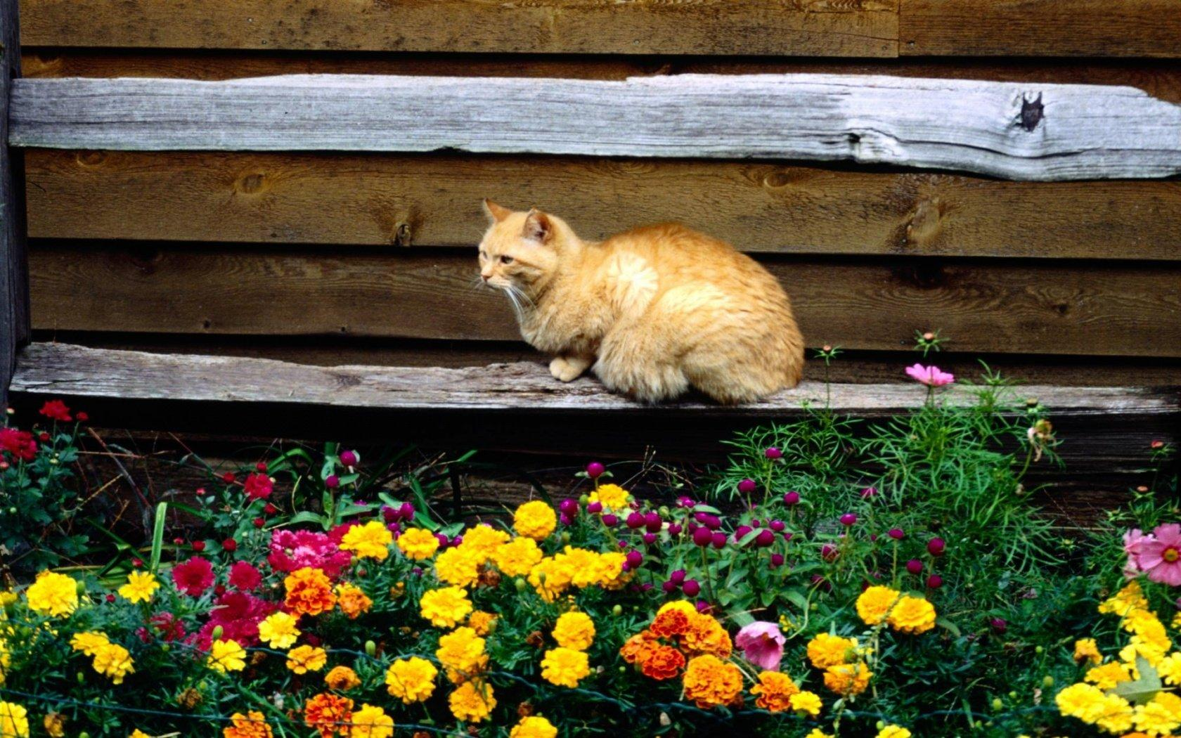 Обои Cat and flowers 1680x1050