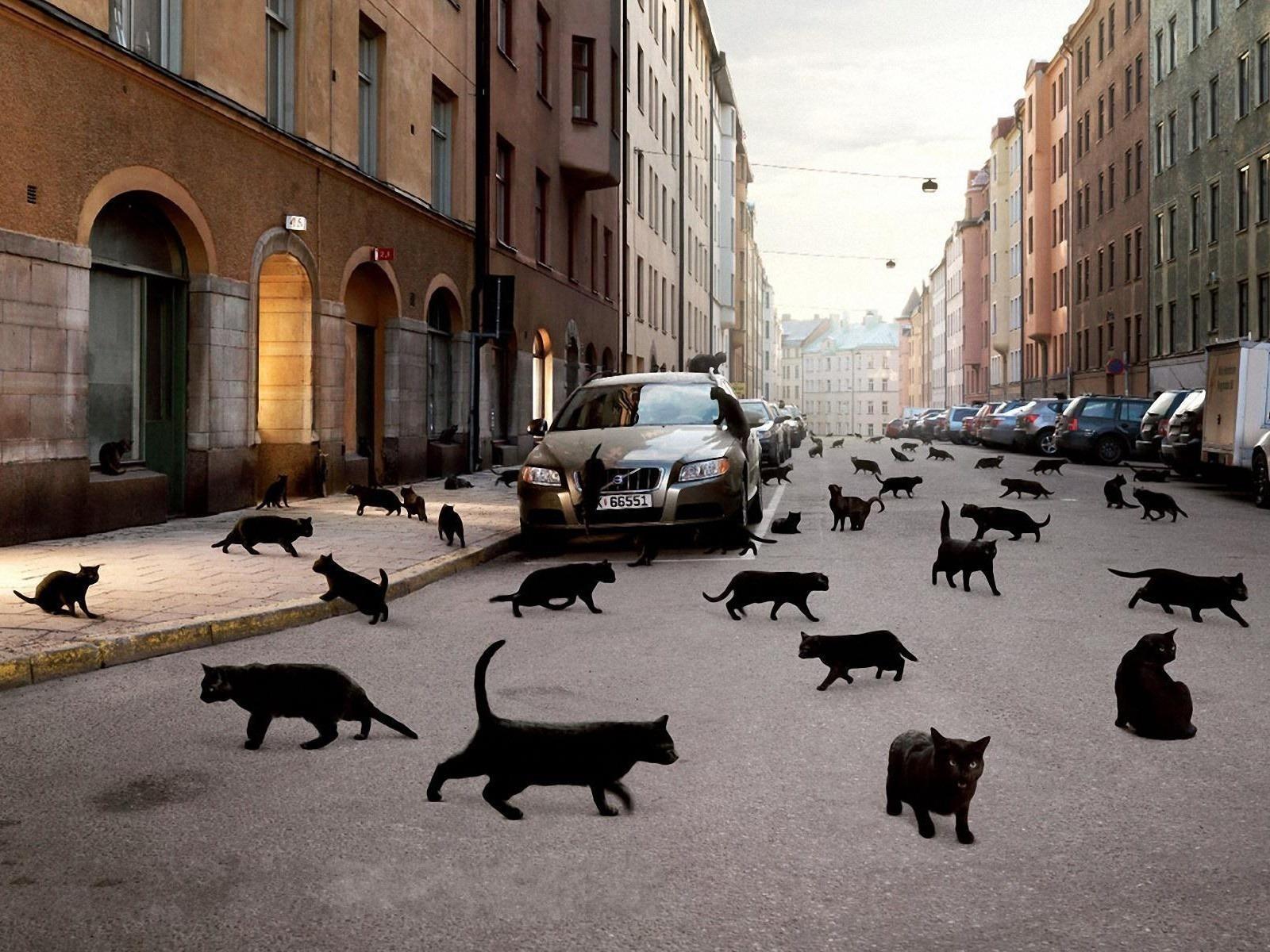 Скачать обои черные кошки 1600x1200