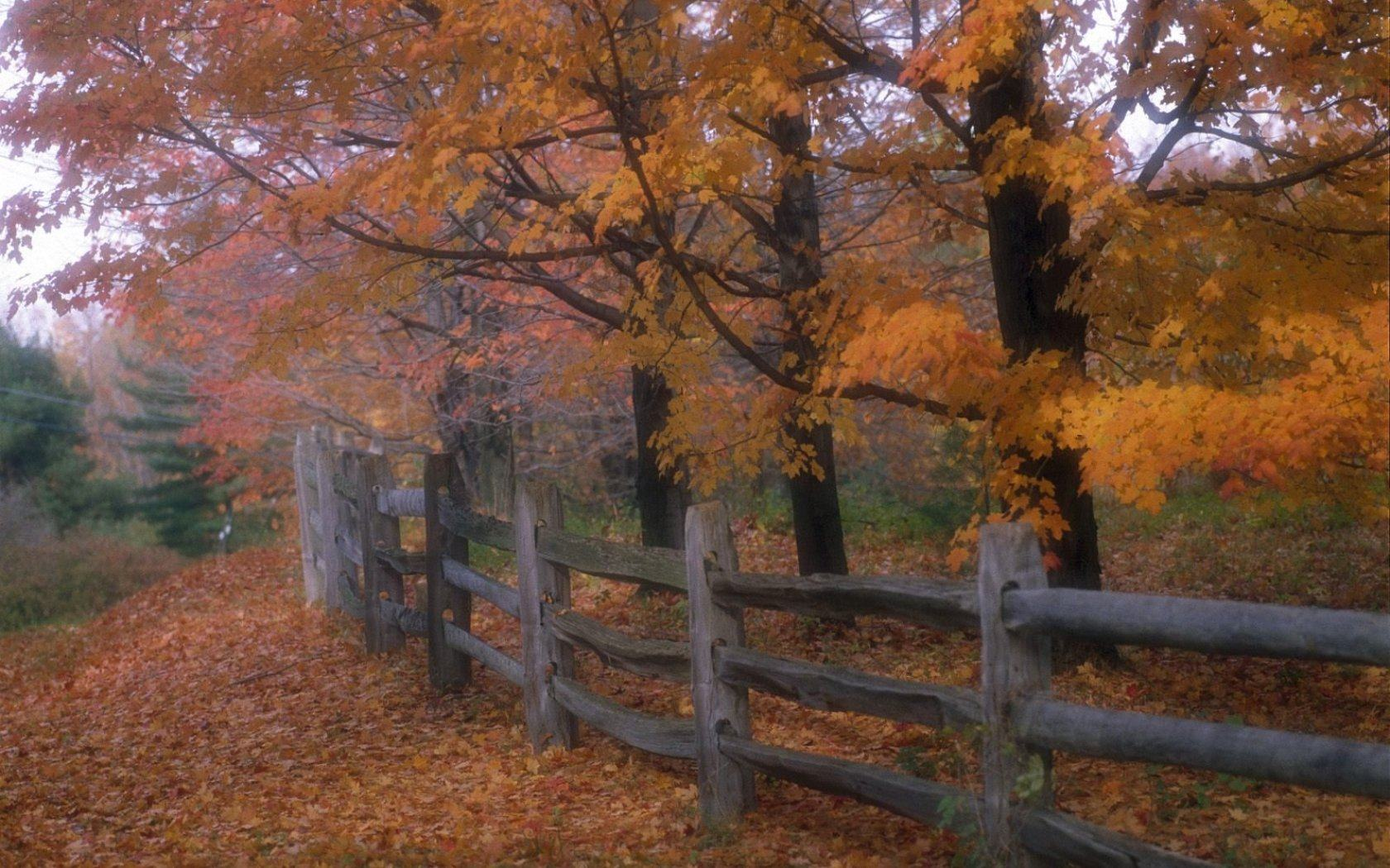 ���� Country fence 1680x1050