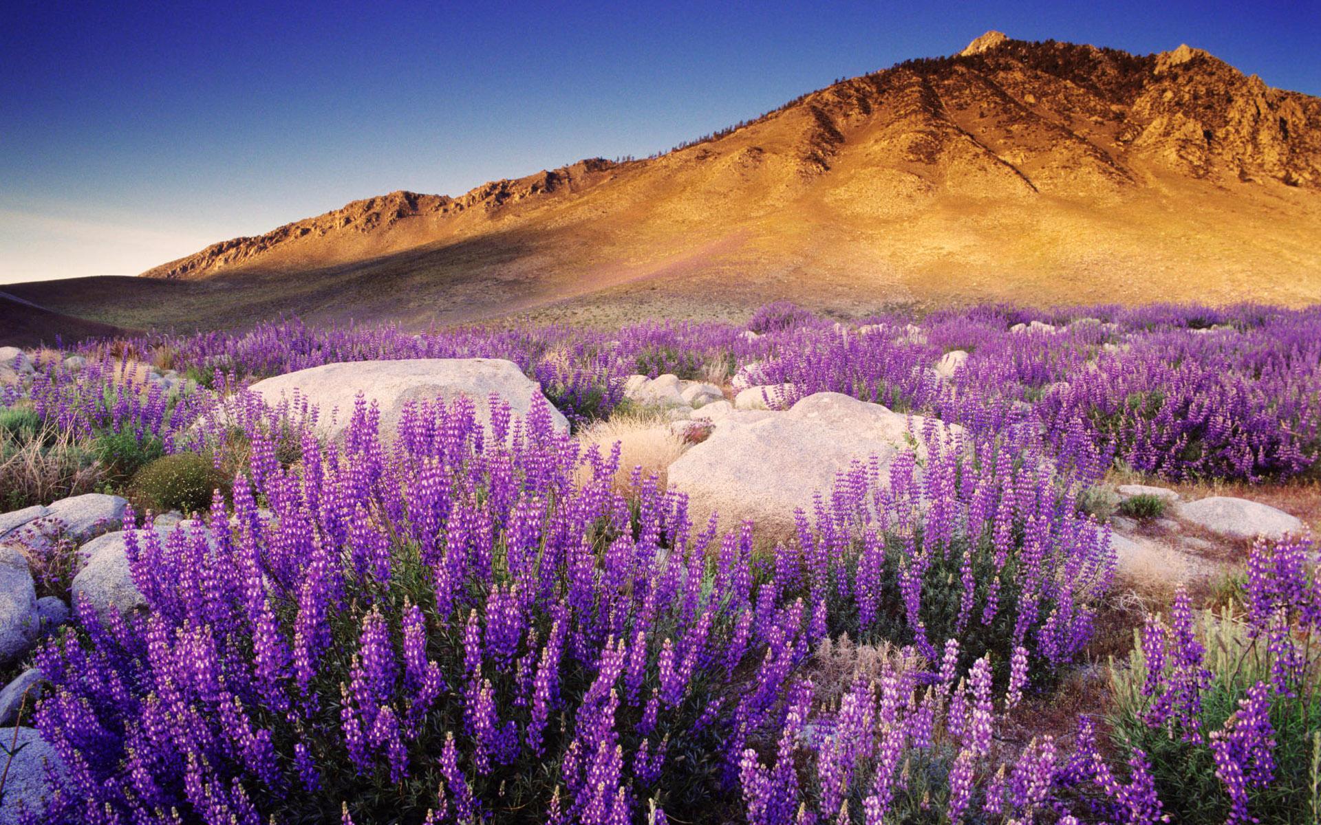 Стола природа цветущая пустыня 1920x1200