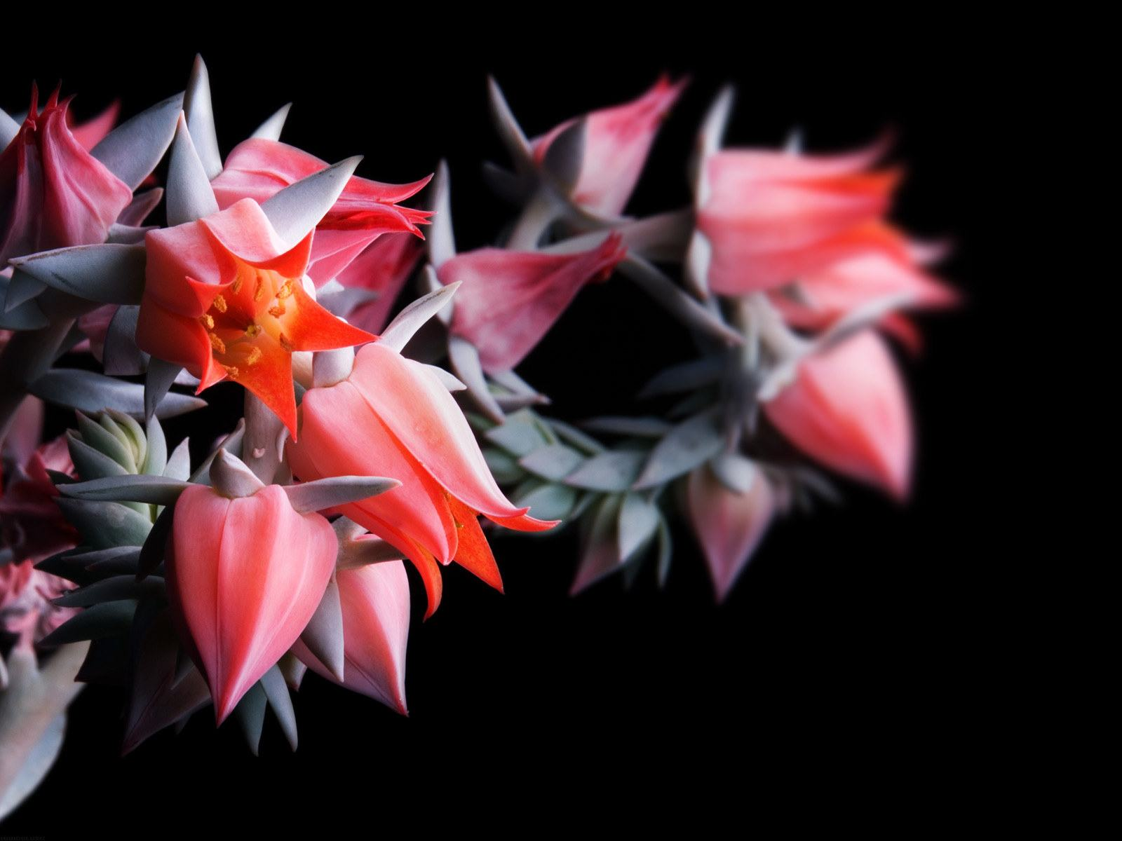Фото цветок на черном фоне