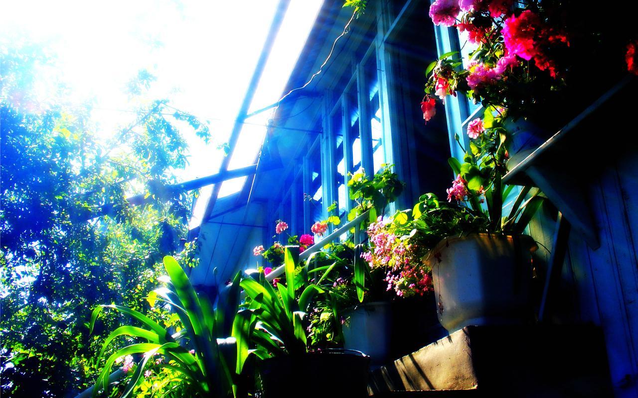 Деревенский домик с цветами обои 1280x800