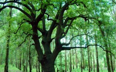 Горы и лес за полем обои 1920x1200