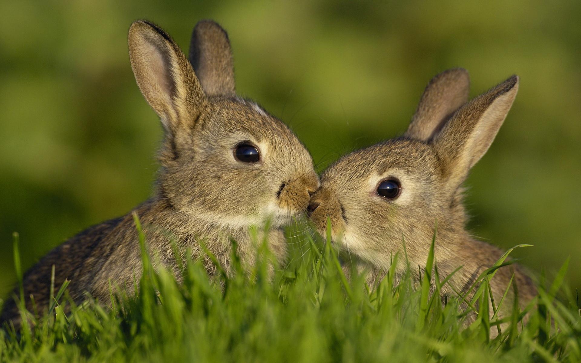фото зайца скачать