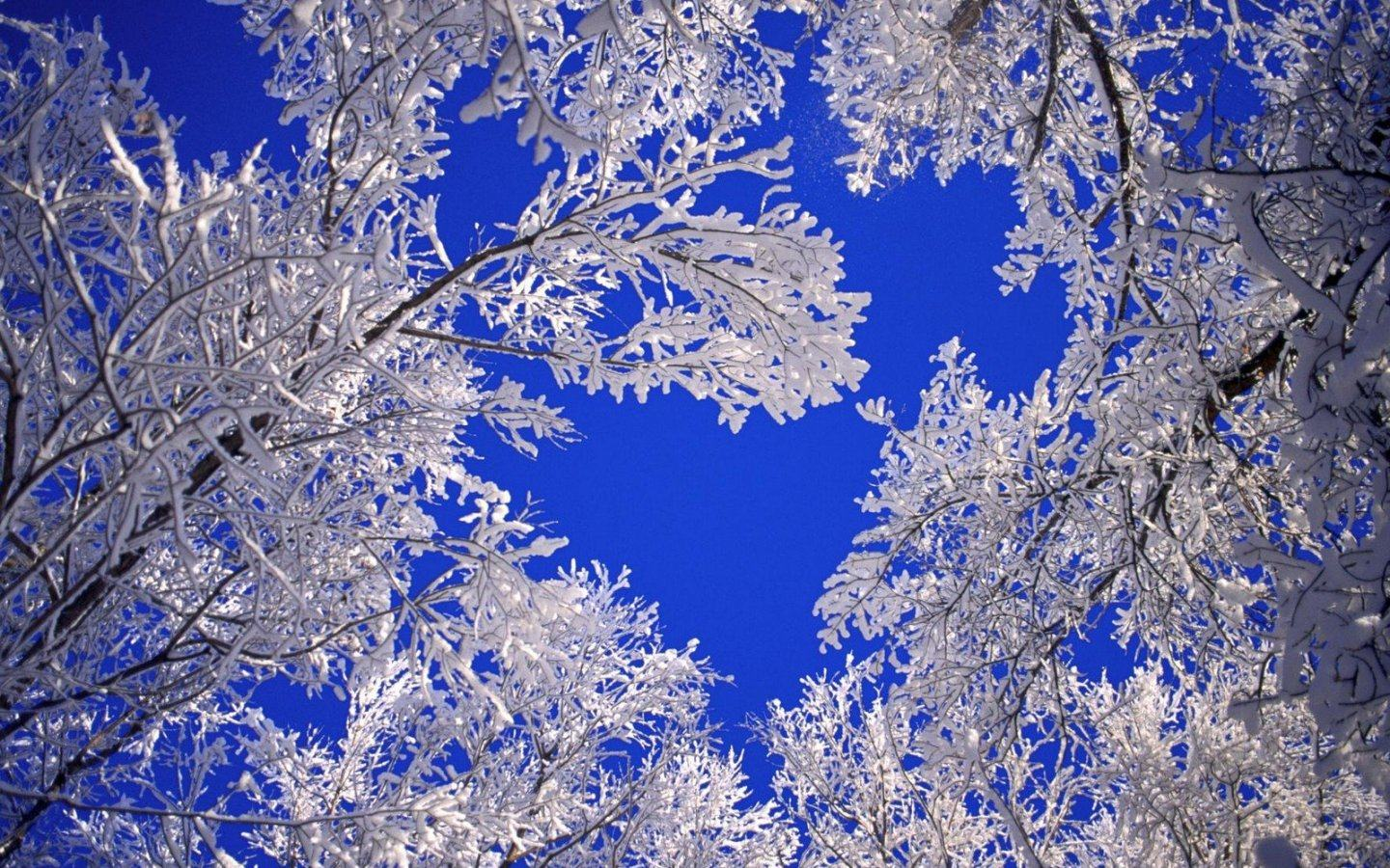 Обои Frosted trees 1440x900