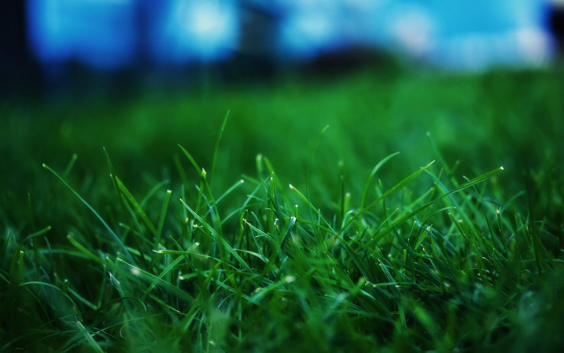поле газон обои