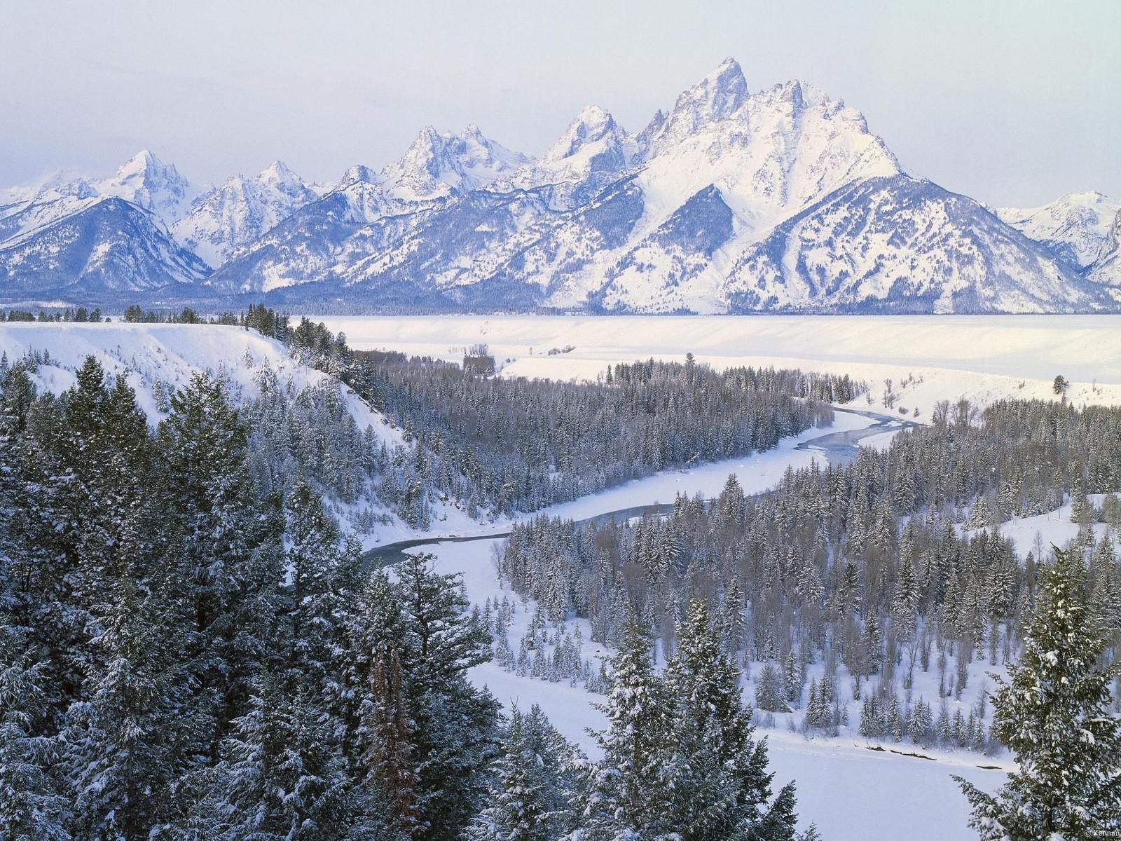 Скачать обои горы снег леса 1600x1200
