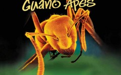 Guano Apes / 1600x1200