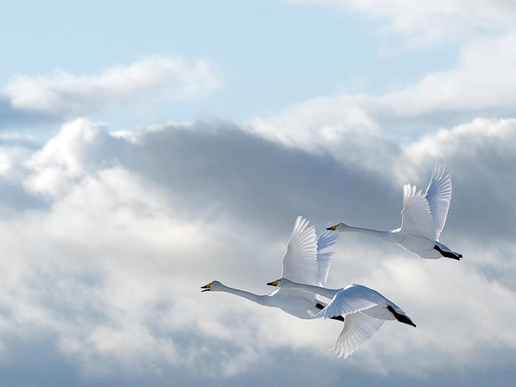 Голубые Небеса Скачать Бесплатно