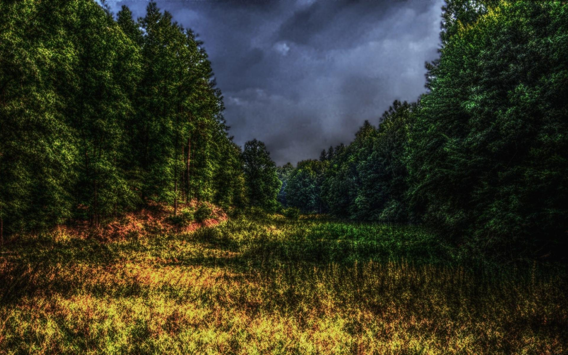 Обои HDR forest 1920x1200