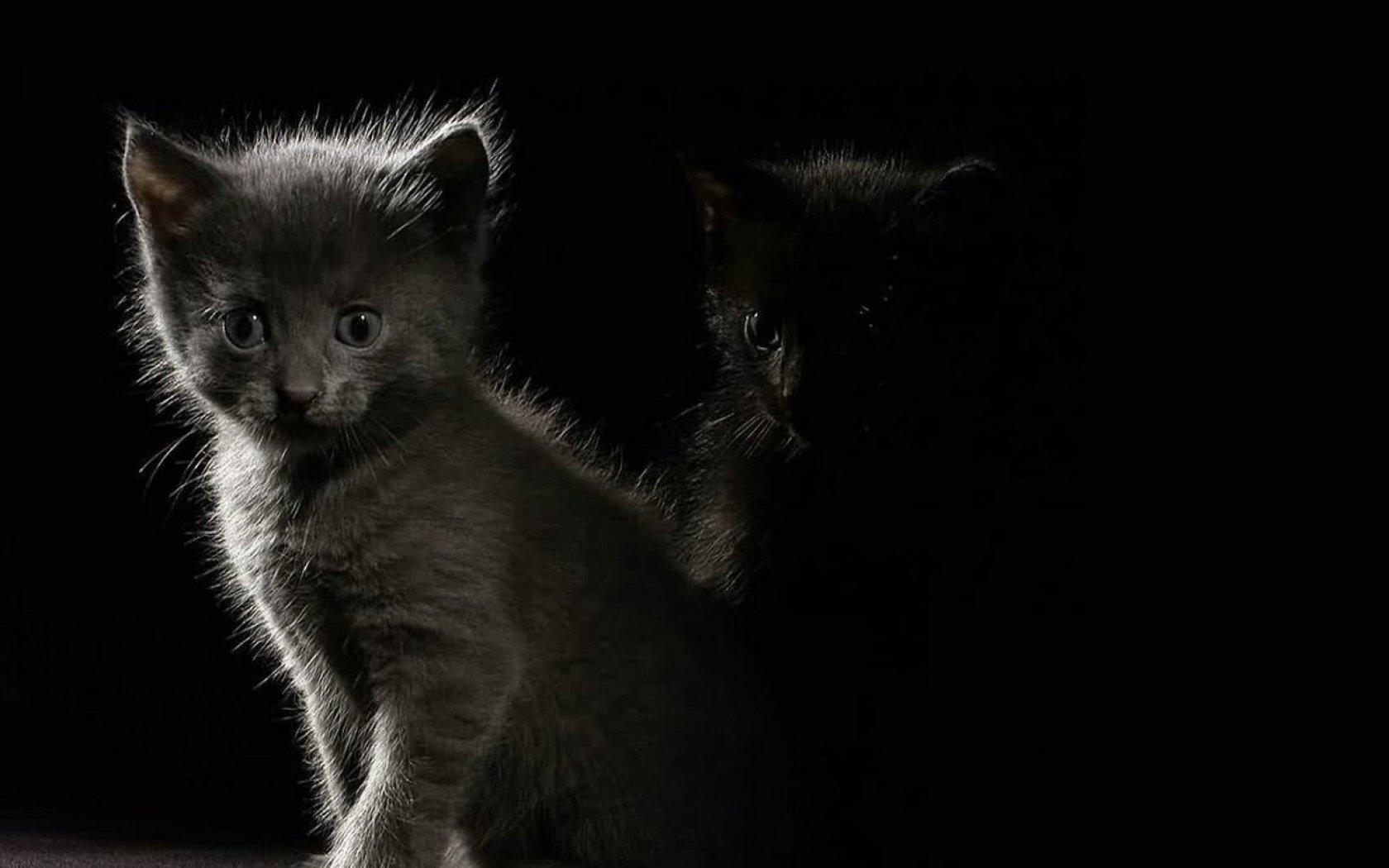 Обои Kitten in the dark 1680x1050