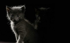 Kitten in the dark / 1680x1050