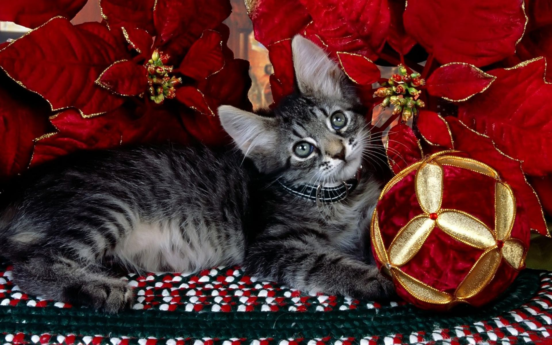 Обои Kitti Christmas 1920x1200