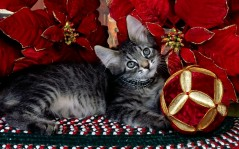 Kitti Christmas / 1920x1200