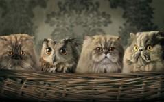 Котята и совенок прикольные обои