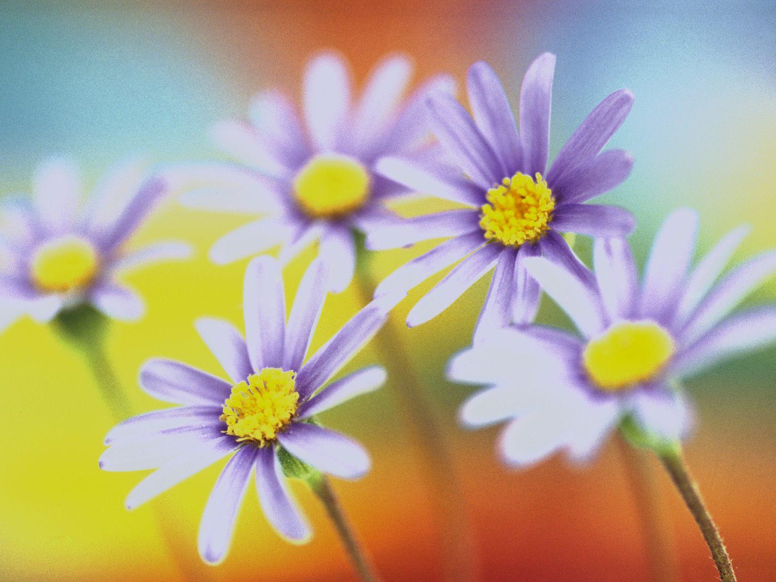 Цветы красивые цветы и краски весны