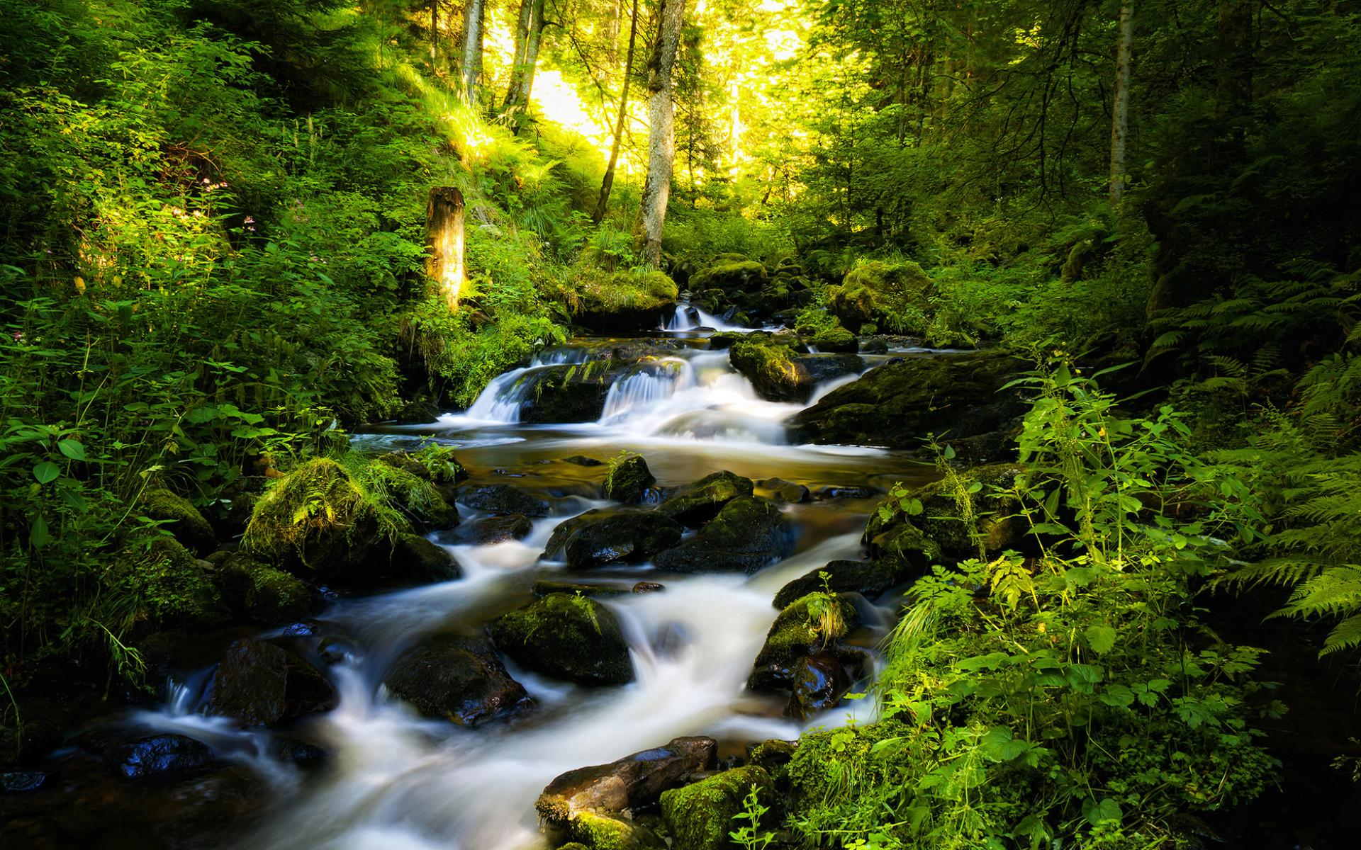 Обои красивые и яркие лесной природы