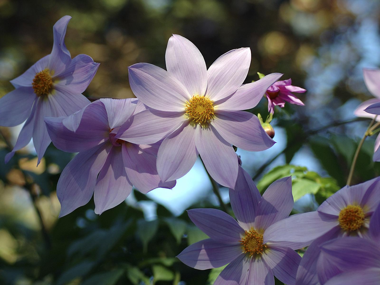 Красивые летние цветы с цветами 1600x1200