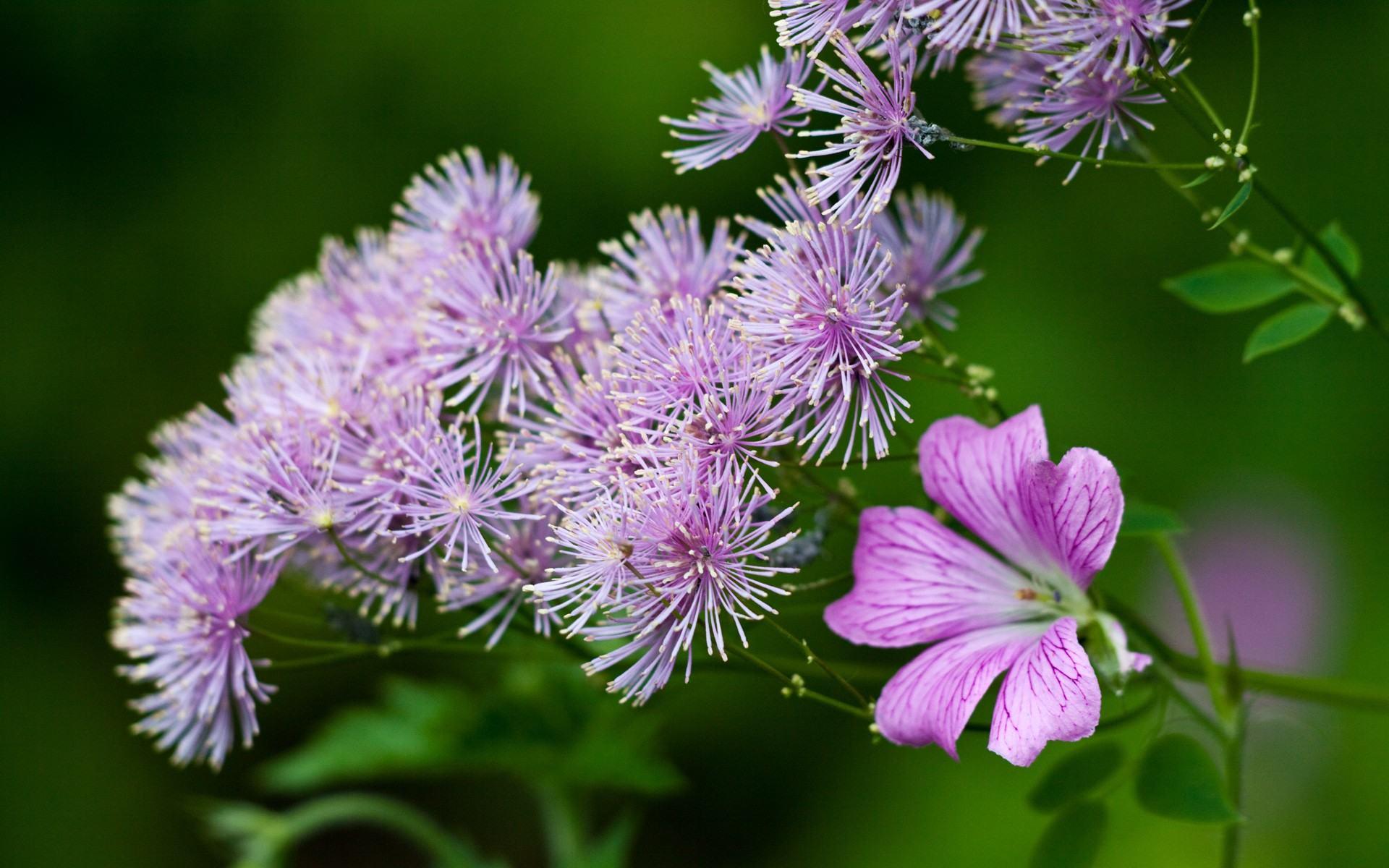 Скачать обои красивые полевые цветы