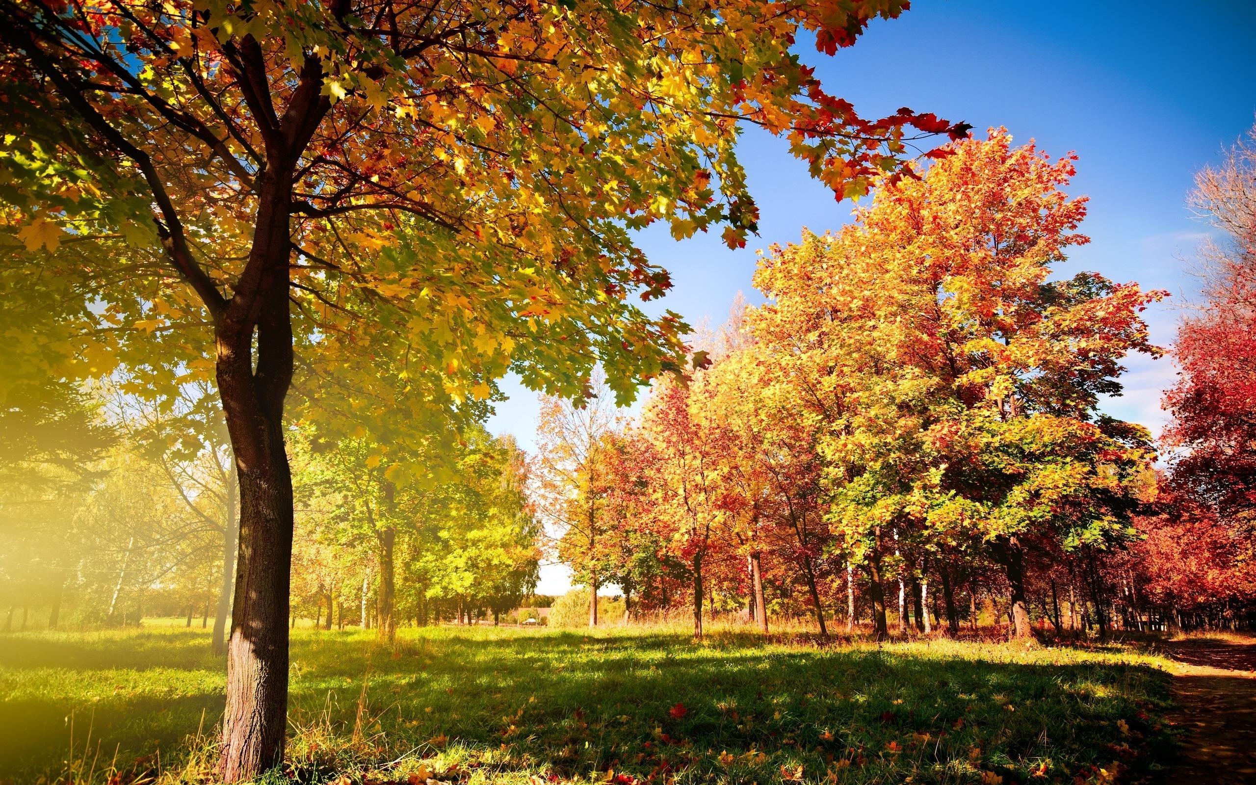 Скачать обои красивый осенний пейзаж