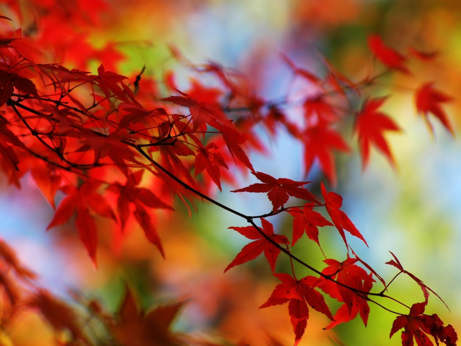 скачать осенние красивые картинки