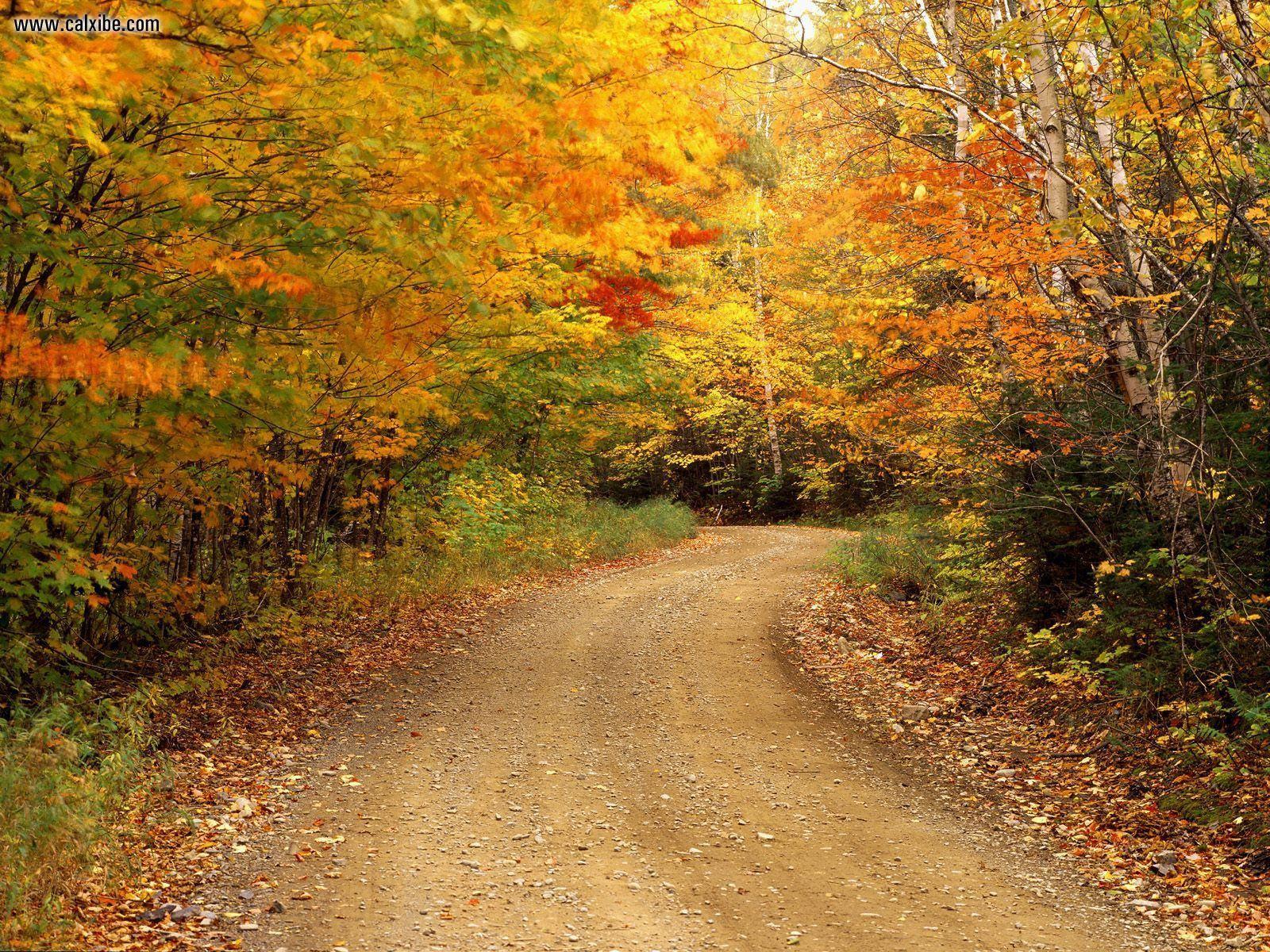 Скачать обои лес золотой осенью 1600x1200