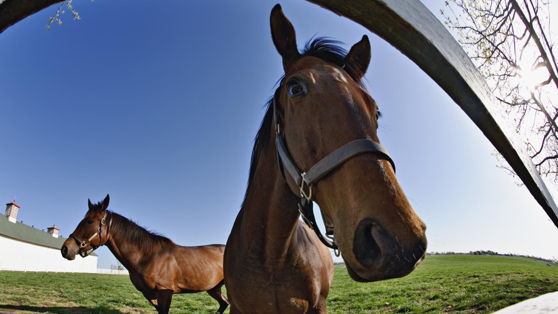 Скачать обои лошади в загоне 1920x1080