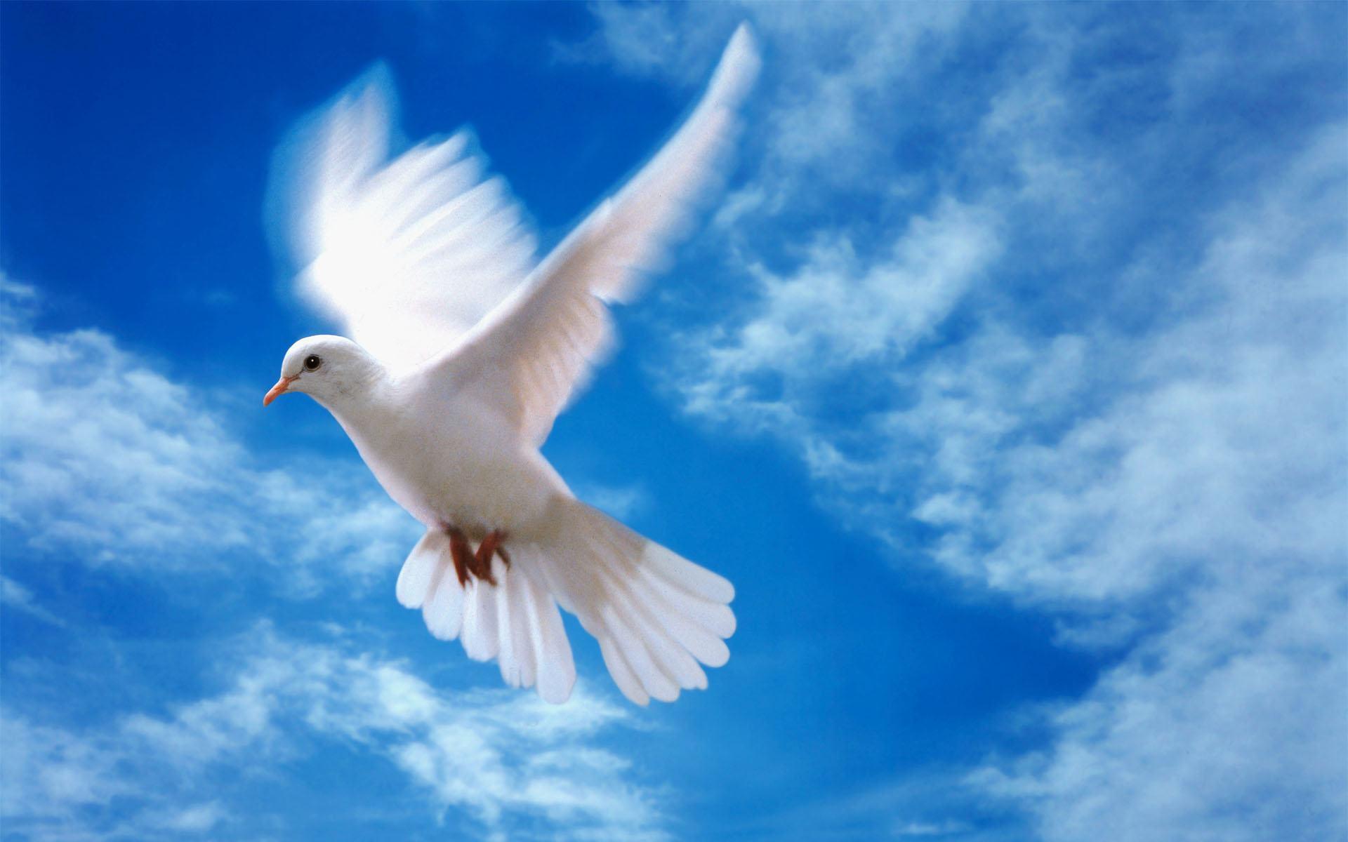 Стола любовь любовь и голуби 1920x1200