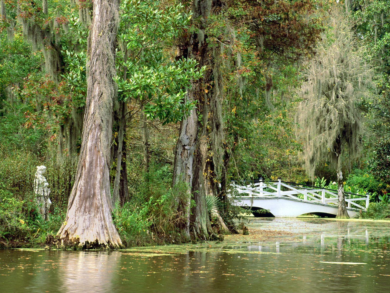 Обои Magnolia plantation gardens charleston south carolina 1600x1200