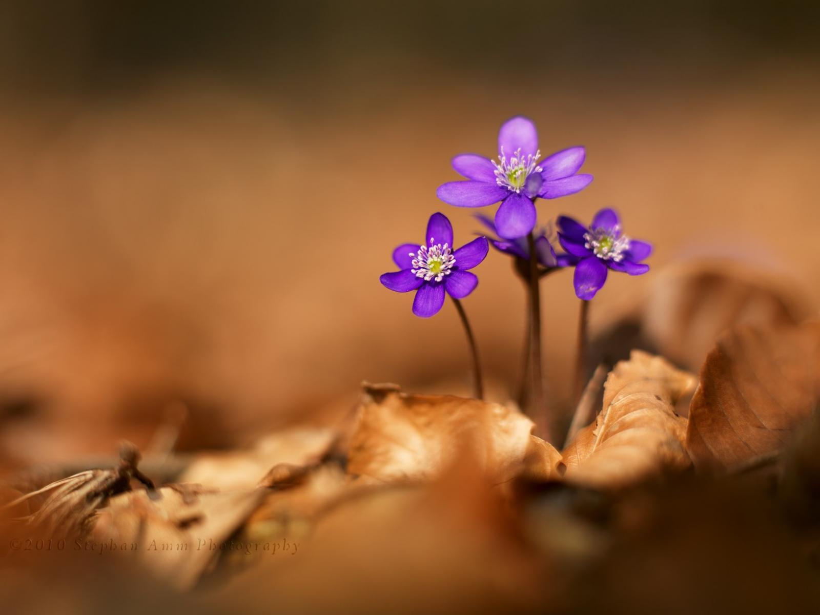 фото макро цветов: