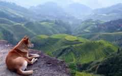 Пастушья собака собака скелет собака