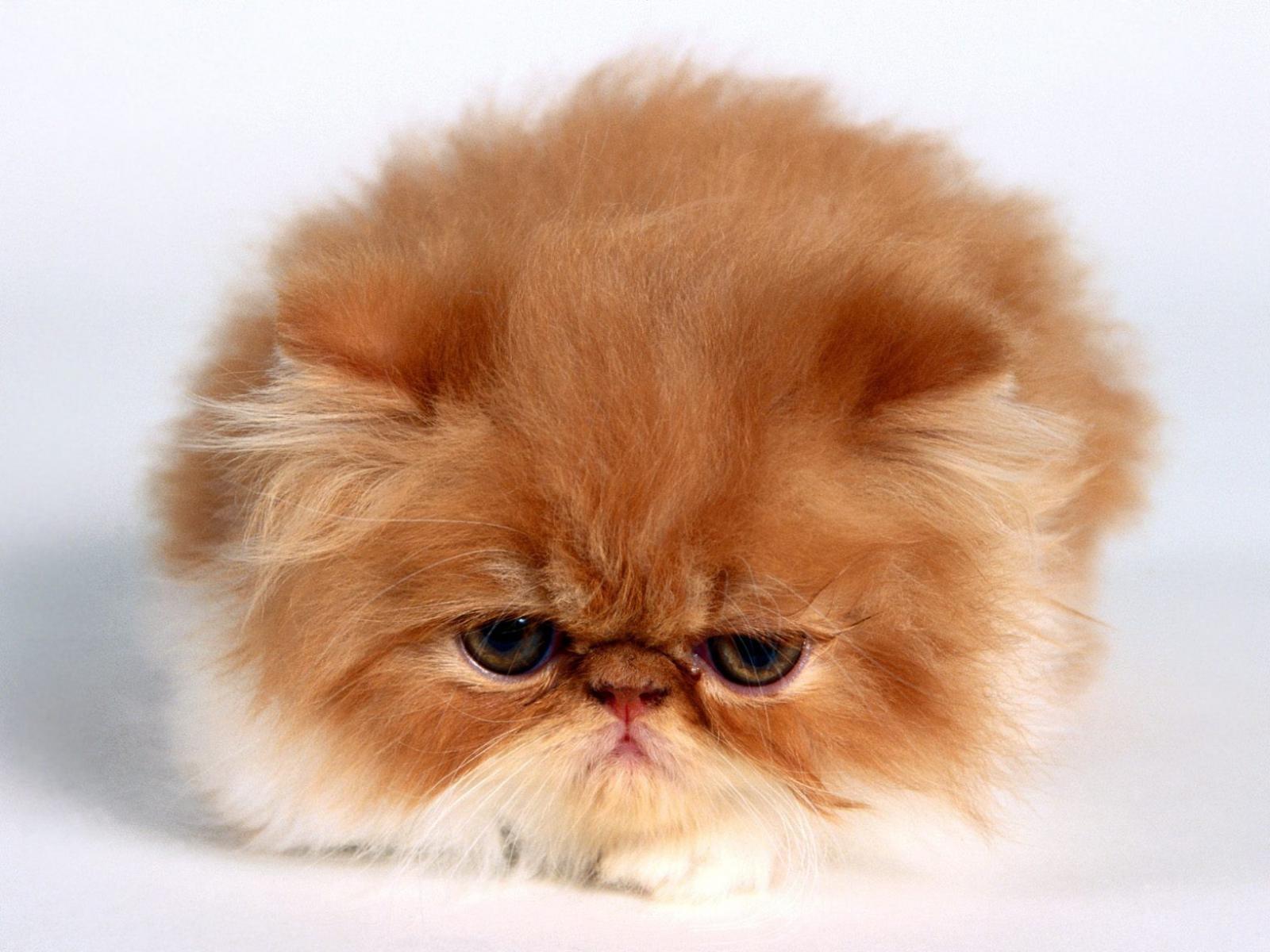 картинки с котятами: