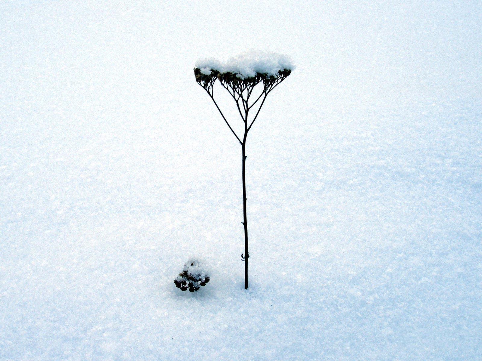 нэнси на белом белом покрывале января слушать