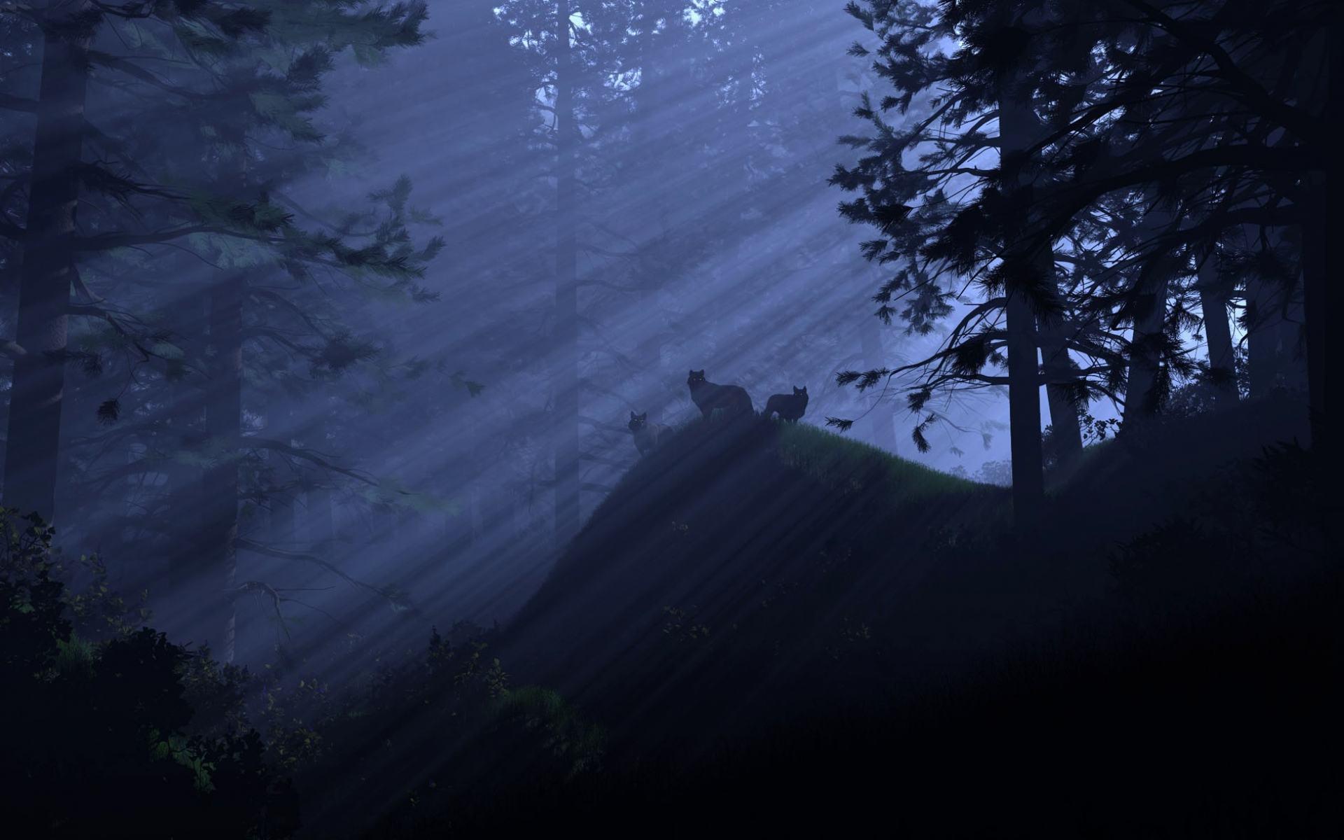 картинки ночного леса