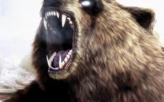 Оскал медведя / 1024x768