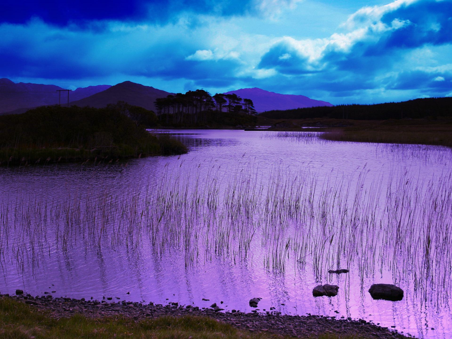 Обои озеро и камыши большие природы