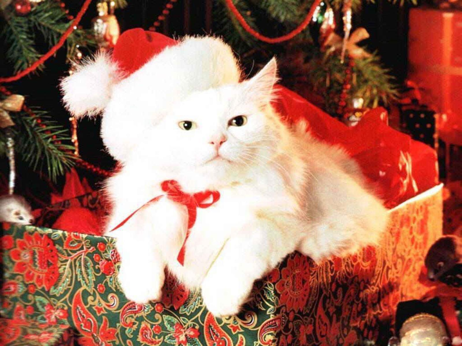 Коты к новому году готовы.
