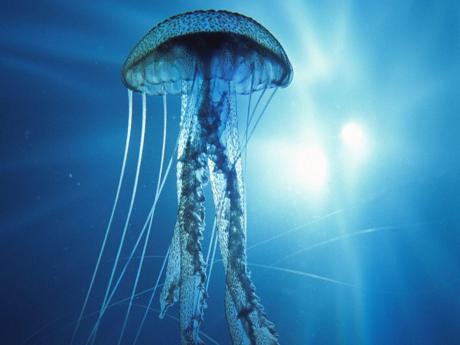 Подводный мир медуза в лучах солнца