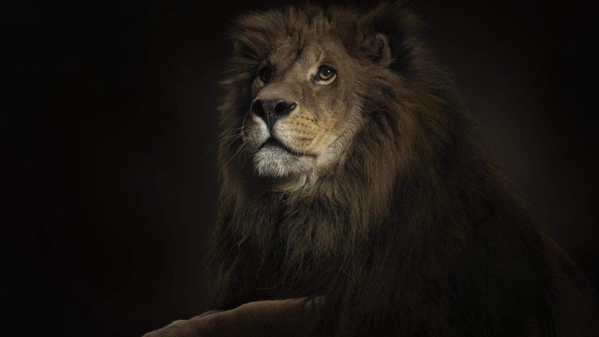 Обои Симба, Тимон, лев, Пумба, Нала, обезьяна и гиены сидят на ... | 1080x1920