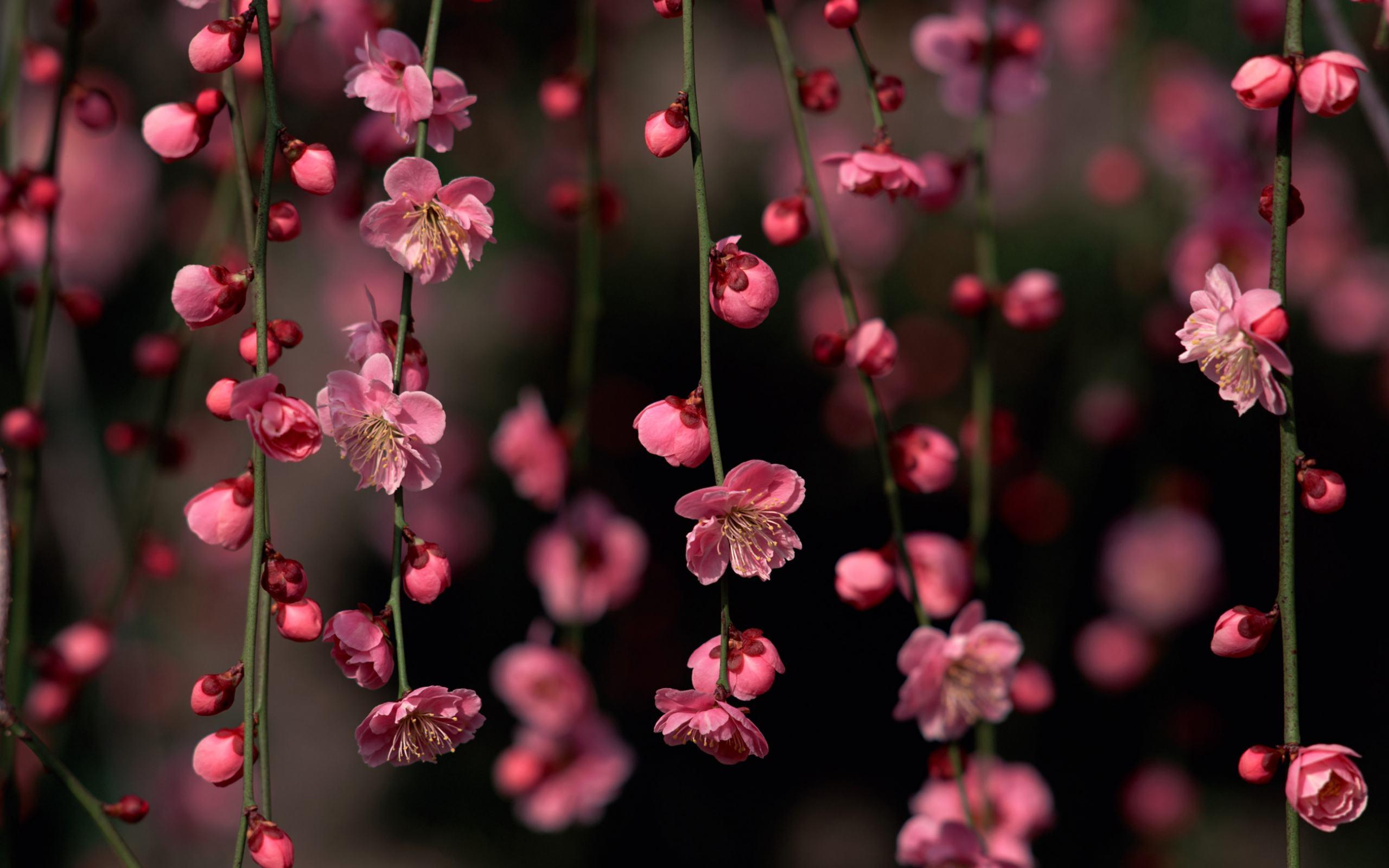 Прекрасное цветущее дерево природы