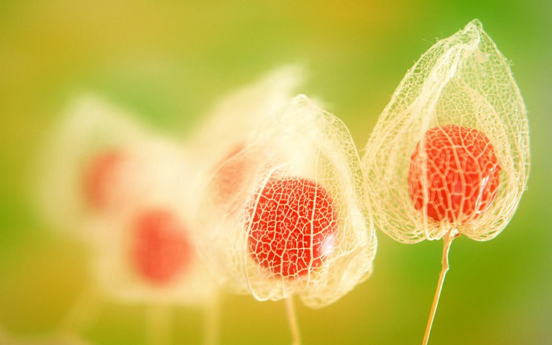 Скачать обои призрачные красные цветы