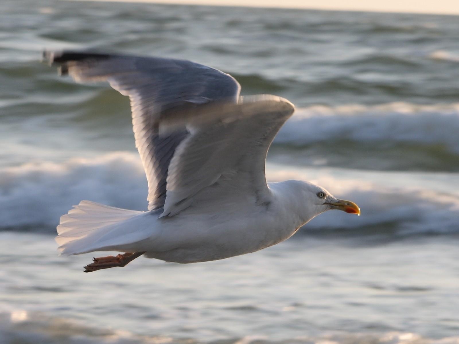 Скачать обои птица в полете 1600x1200