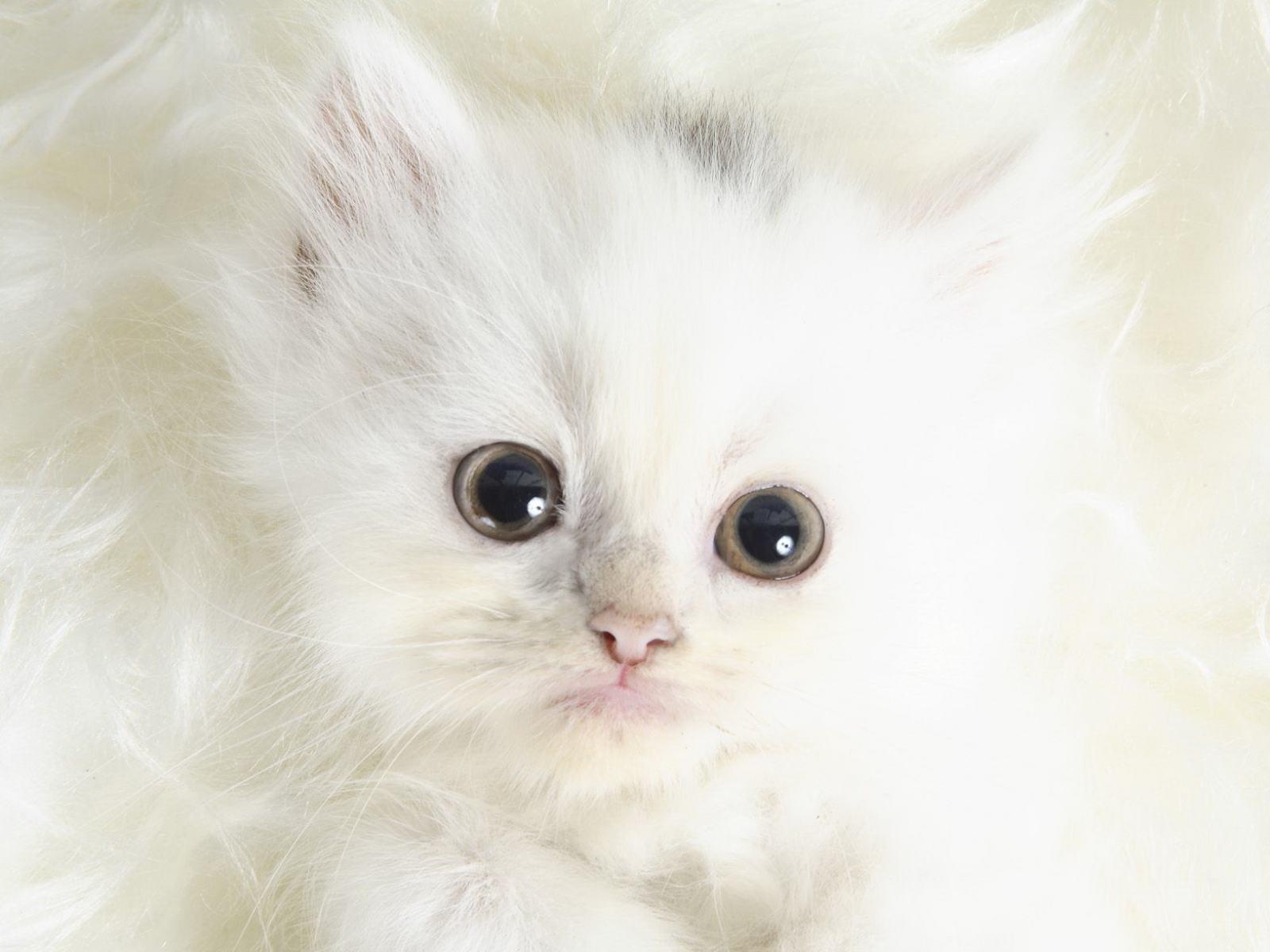скачать картинку котёнка