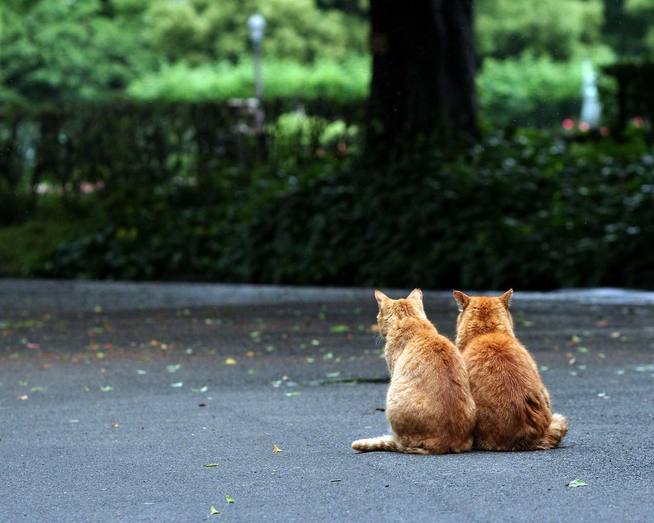Скачать обои рыжие коты 1280x1024