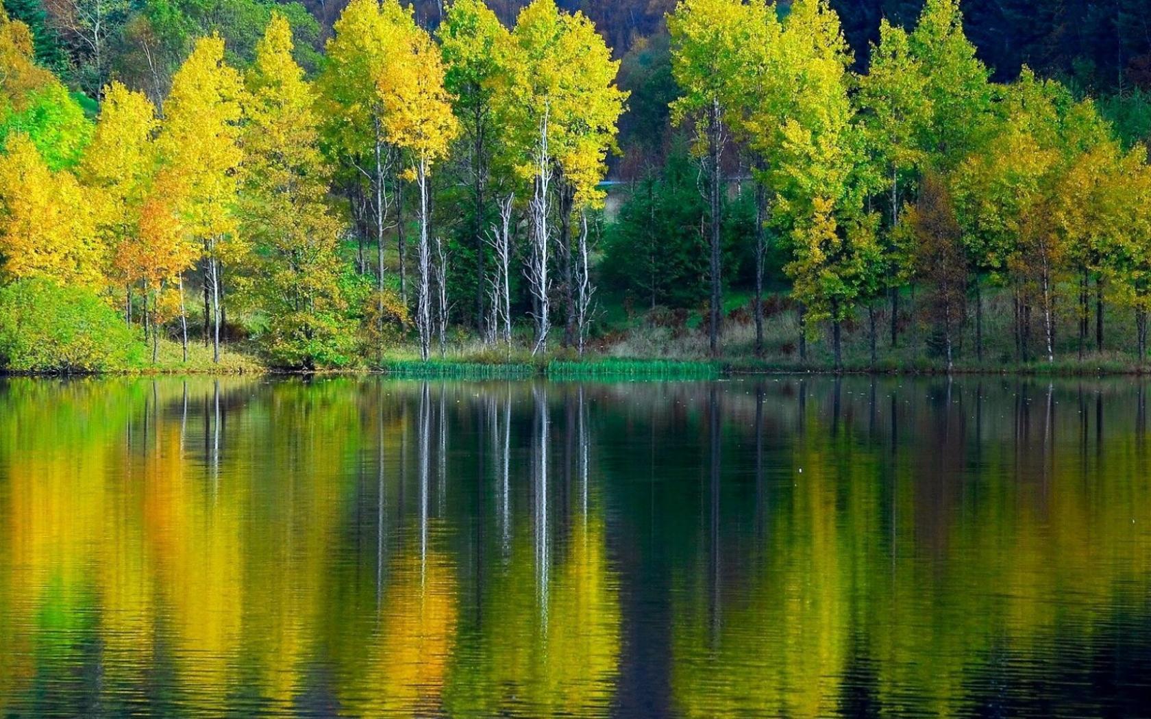 Скачать обои лиственный лес лучи солнца сквозь ветки.