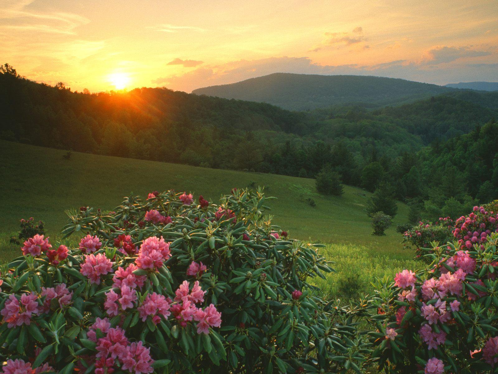 Природа сказочная природа и яркие