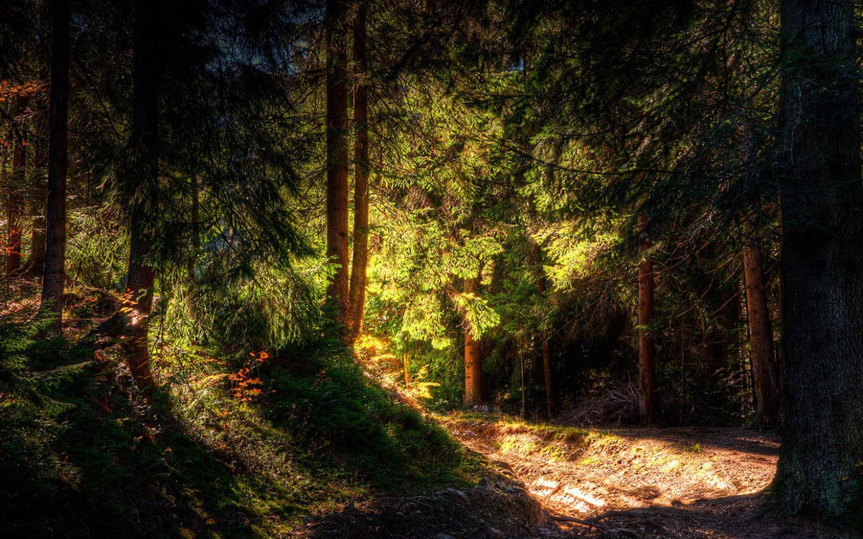 Обои сказочный лес сказочный лес