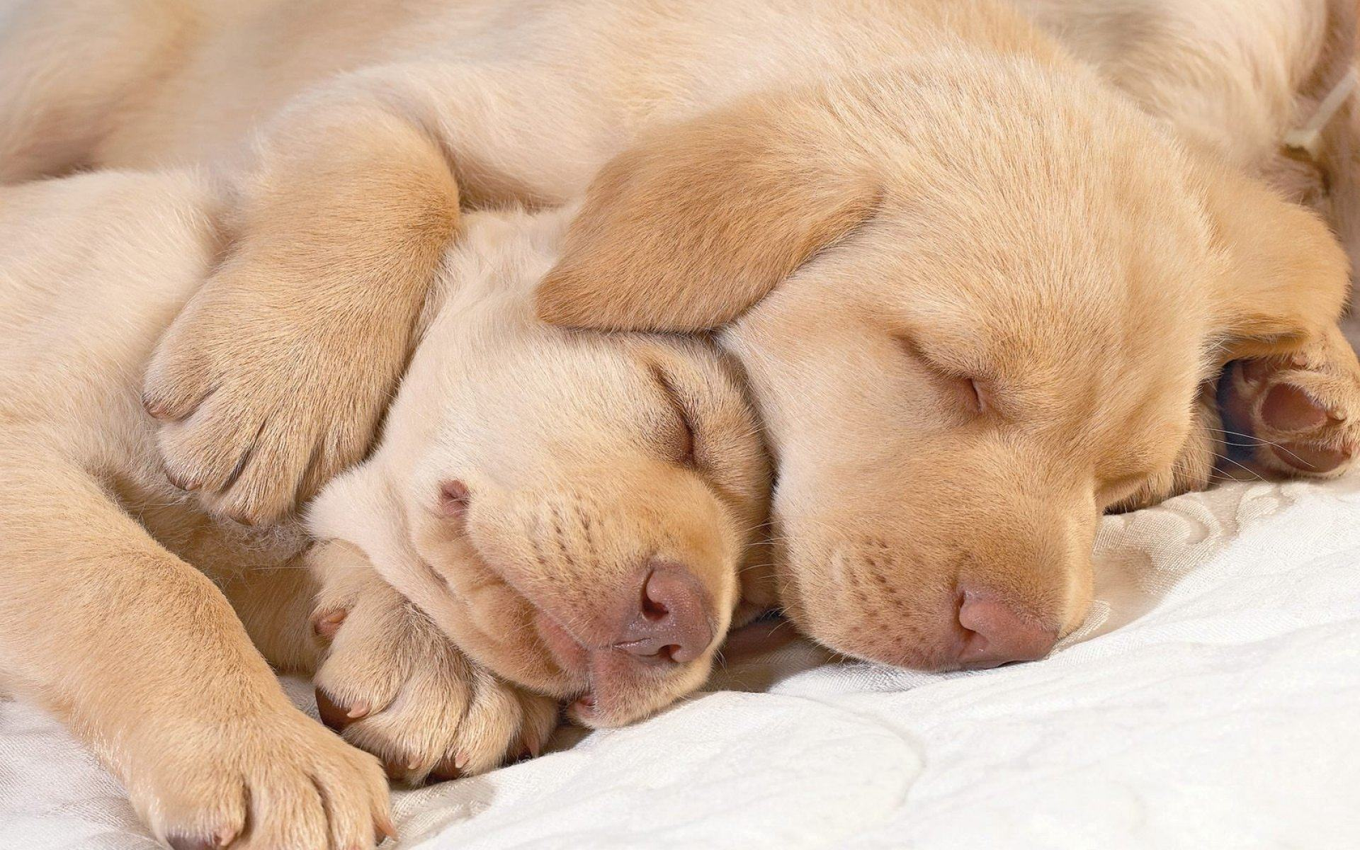 Обои Sleeping puppies 1920x1200